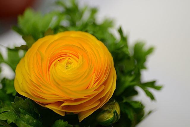 flowerPetals0