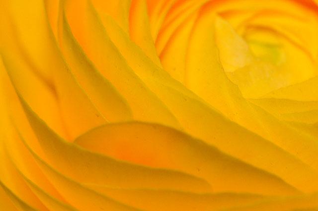 flowerPetals1