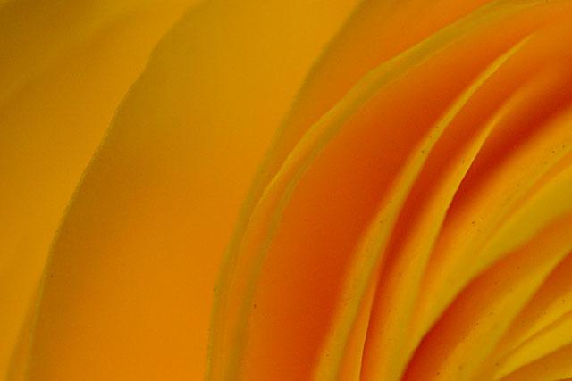 flowerPetals2
