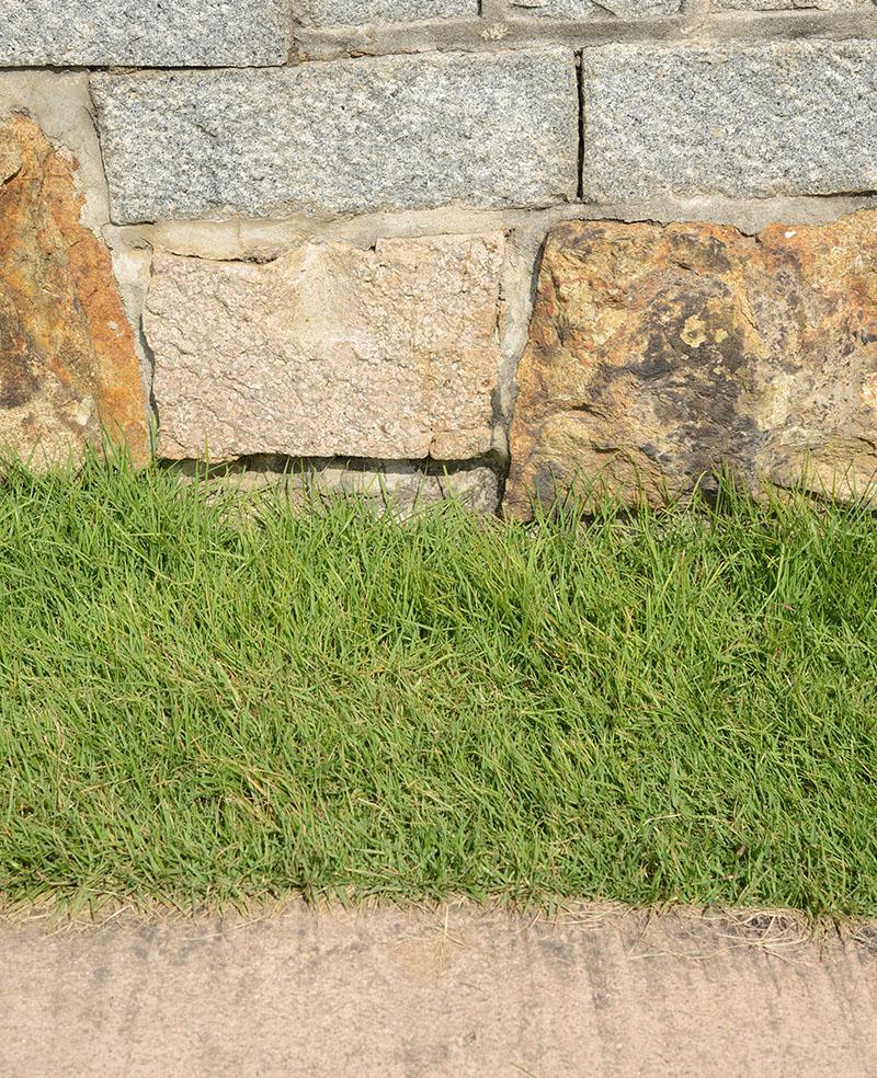 suwon_wall_mix_grass