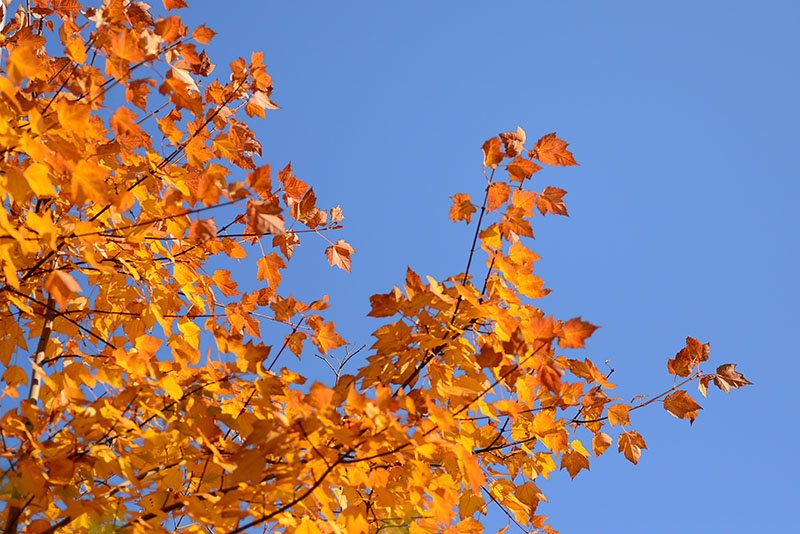 autumn_leaves2013e